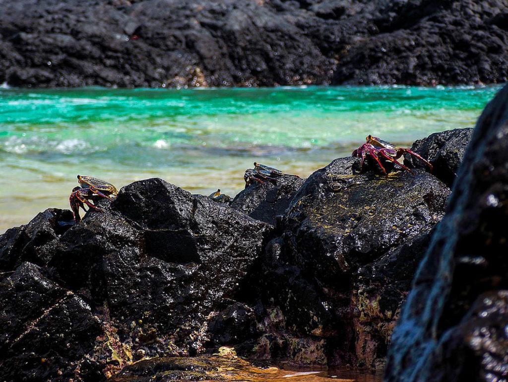 Onde fica Fernando de Noronha - por Praia do Sanho por Rafa Tecchio