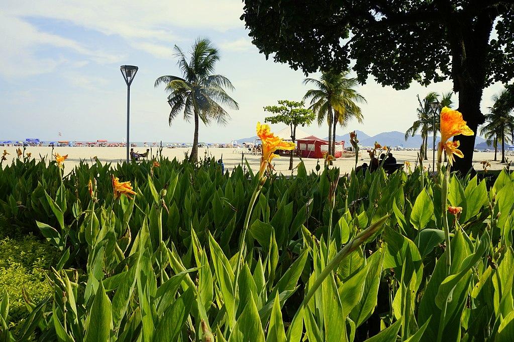 Melhores praias do litoral sul SP - Praia do Gonzaga - Santos